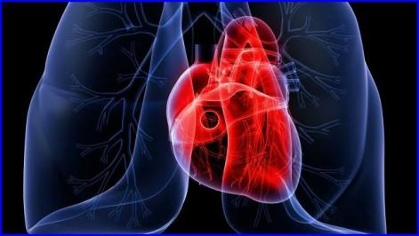 lung-heart